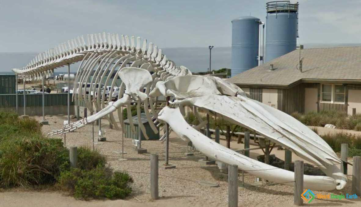 A huge whale's skeleton at Seymour Marine Discovery Center in Santa Cruz, California, USA