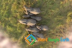 Elephants, Zakouma National Park, Tchad