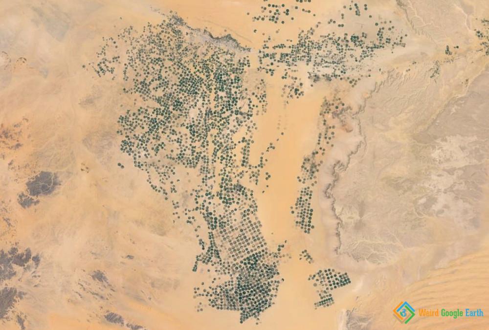 Magnificent Number of Irrigation Circles, Wadi Addawasir, Saudi Arabia