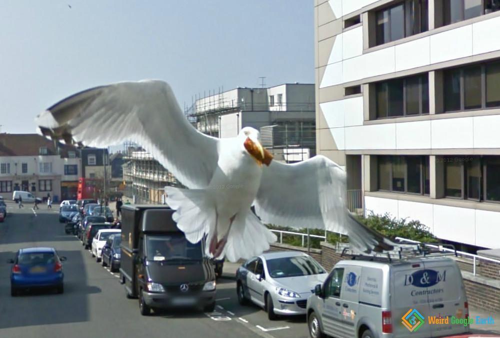 Seagull Attack, Brighton, England, United Kingdom