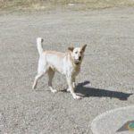Random Dog, Fraser-Fort George C, British Columbia, Canada