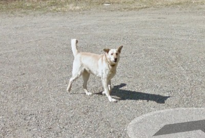 Random Dog, Fraser-Fort George C, British Columbia, Canada