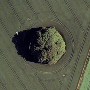 Trees in a Cirle, Marlborough, Wiltshire, United Kingdom