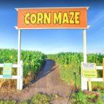 Edmonton Corn Maze, Edmonton, Alberta, Canada