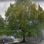 Liberty Tree, Bayeux, France