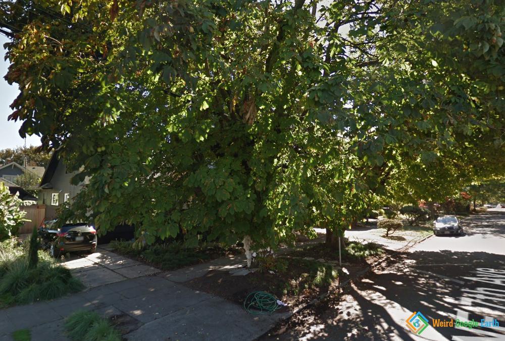 Wishing Tree, Portland, Oregon, USA