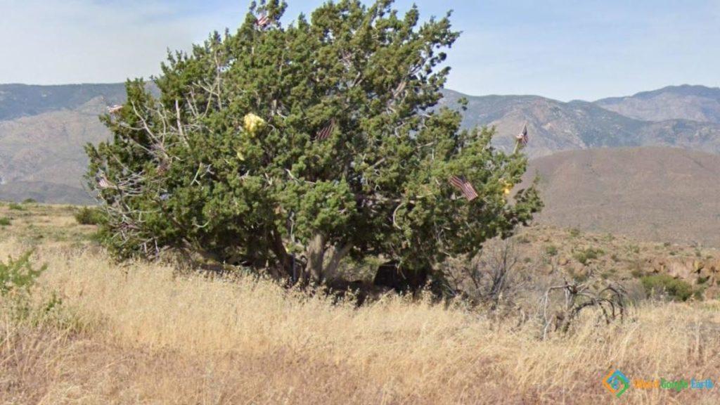 Mysterious I-17 Christmas Tree, Black Canyon City, Arizona