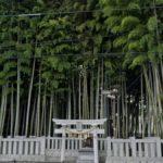 The Forest of Yawata, Ichikawa, Japan