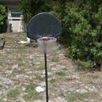 Censored Net, Mt Dora, Florida, USA