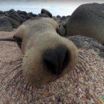 A Curious Little Thing, North Seymour Island, Ecuador