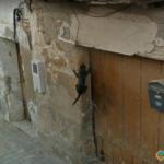 Spidercat, Menarguens, Catalonia