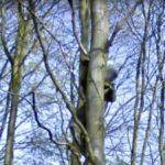 Creepy Man on Tree, Peer, Belgium