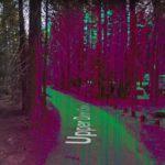 Purple Forest, Lakeshore, California, USA